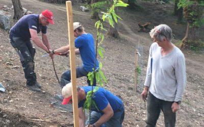 Mai 2020 | Plantations des jeunes châtaigniers